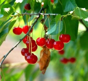 cerezas-alergia-biodescodificacion