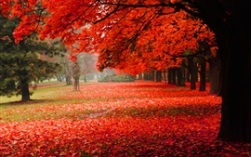 nature-scenery-park-autumn-red-foliage_s